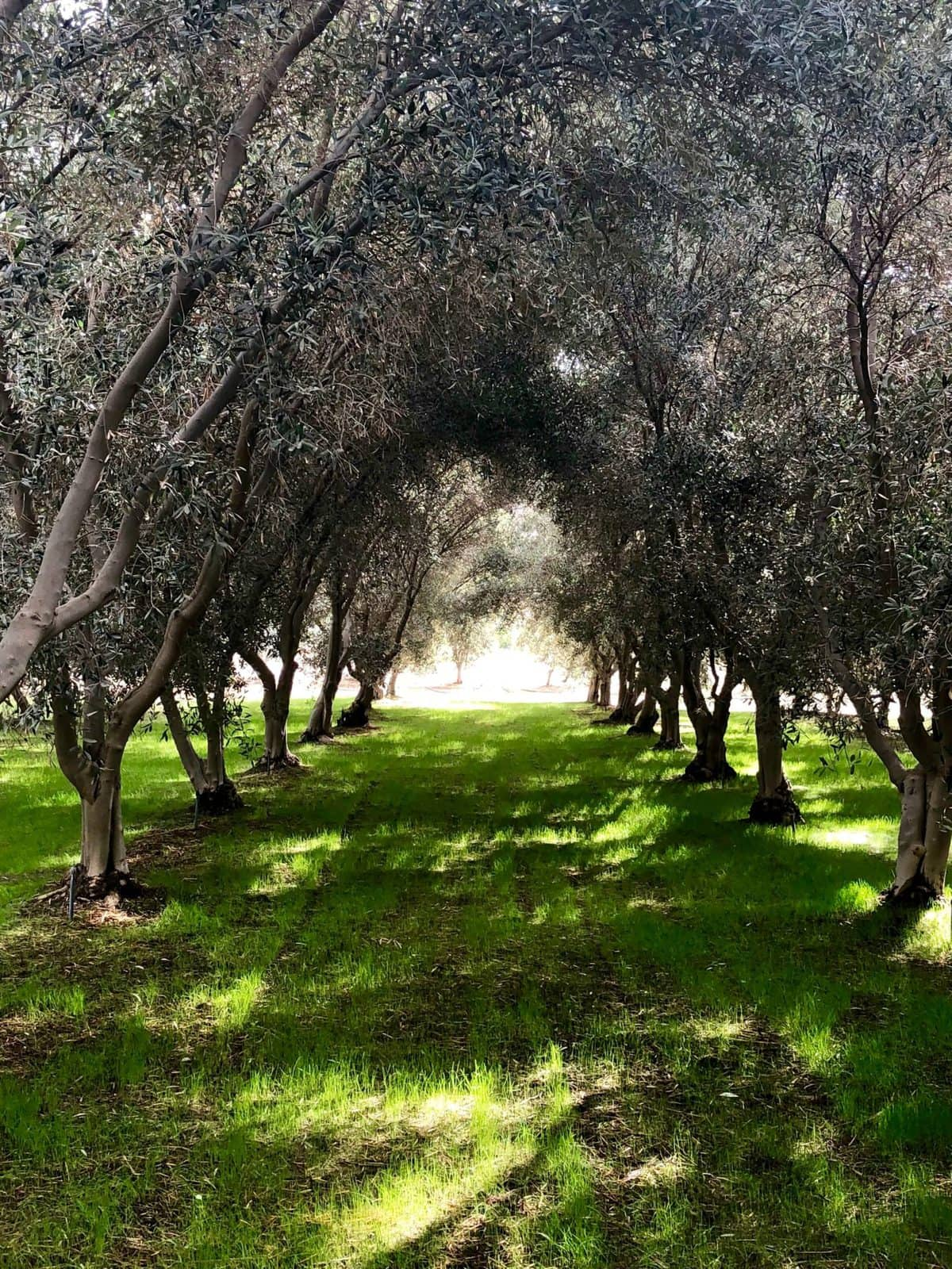 Things to do in Temecula Valley - Temecula Olive Oil Company | Peace Love and Low Carb