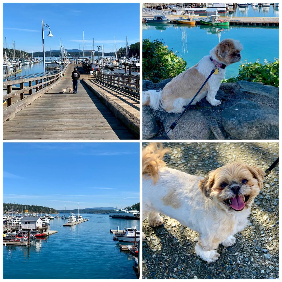 Pet Friendly San Juan Island | Peace Love and Low Carb